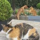 miniature pour Un chat protège son ami chien