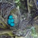 timelapse-nid-oiseaux-surprise