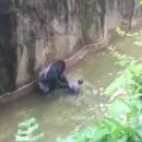 enfant-tombe-enclos-gorille