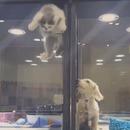 miniature pour Un chaton s'échappe dans la cage d'un chiot pour jouer avec lui