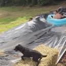 chien-ejecte-toboggan-aquatique