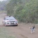 miniature pour Un chien devant une voiture de Rallye