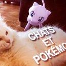 chats-pokemons