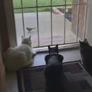 chien-peur-3-chats-concentres-oiseau