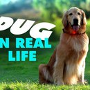 dug-chien-parle-vrai