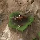 vaches-coincees-tremblement-terre-nouvelle-zelande