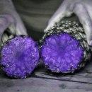 miniature pour 10 fruits découpés sous une lumière UV