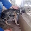 miniature pour Un chien battu se fait caresser pour la première fois