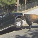 miniature pour Un taureau détruit un 4x4
