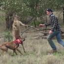 homme-frappe-kangourou-sauver-chien