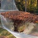 miniature pour Tomber sur un filet rempli de feuilles mortes