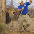 lion-peur-gardien