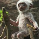 singes-langur-funerailles-faux-singe-robot