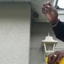 miniature pour Un homme détruit un nid de guêpes à mains nues