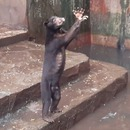 ours-maigres-affames-zoo-bandung