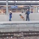 miniature pour Un chien de la police fait tomber une dame sur la voie ferrée