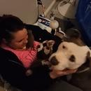 miniature pour Une chienne met ses petits dans les bras de sa nouvelle maitresse