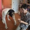 Fabrication d'un chimpanzé en laine - Timelapse