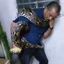 miniature pour Un homme essaye d'attraper un gros serpent