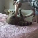miniature pour Une fille aveugle qui joue avec son chat