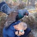 pigeon-geant-copuler-homme