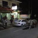 miniature pour Un rhinocéros se promène dans la rue au Népal