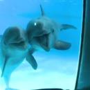 dauphins-voir-premiere-fois-miroir