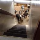 miniature pour Des chiens attendent d'être appelés pour monter les escaliers