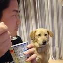 miniature pour Un chien trop timide pour demander du yaourt