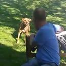 miniature pour Il perd 23kg et son chien ne le reconnait plus