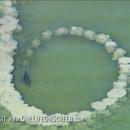 dauphins-pieger-poissons-cercle-boue