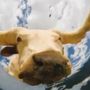 camera-fond-seau-eau-animaux-boire
