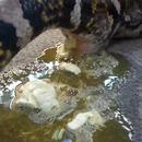 miniature pour Un serpent qui fait pipi