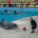 miniature pour Un dauphin joue au ballon avec un enfant