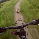 course-contre-marmotte