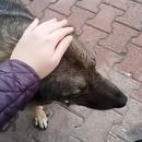 chien-errant-aime-caresse