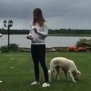 miniature pour Un chien effrayé par une canette de bière éclatée