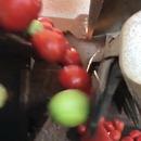miniature pour Système de tri rapide de tomates mures