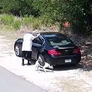 miniature pour Un homme filmé entrain d'abandonner son chien au bord la route