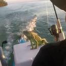 Sauvetage d'un iguane perdu dans la mer