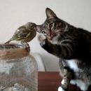 chat-toucher-oiseau-sans-faire-mal