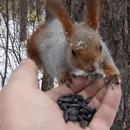 ecureuils-oiseaux-manger-main