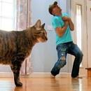 miniature pour Faire semblant de mourir devant son chat