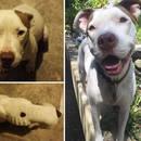 miniature pour 40 adoptions, 40 chiens heureux