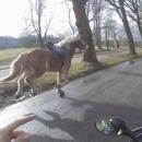 scooter-rattraper-cheval-fuite