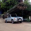 miniature pour Un pickup galère avec un chargement de bambous