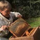 coup-gueule-apiculteur-pesticides