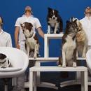 miniature pour OK Go, un clip avec des chiens