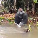 gorille-eclabousse-personnes-bateau