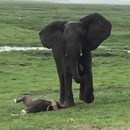 troupeau-elephants-celebrer-naissance